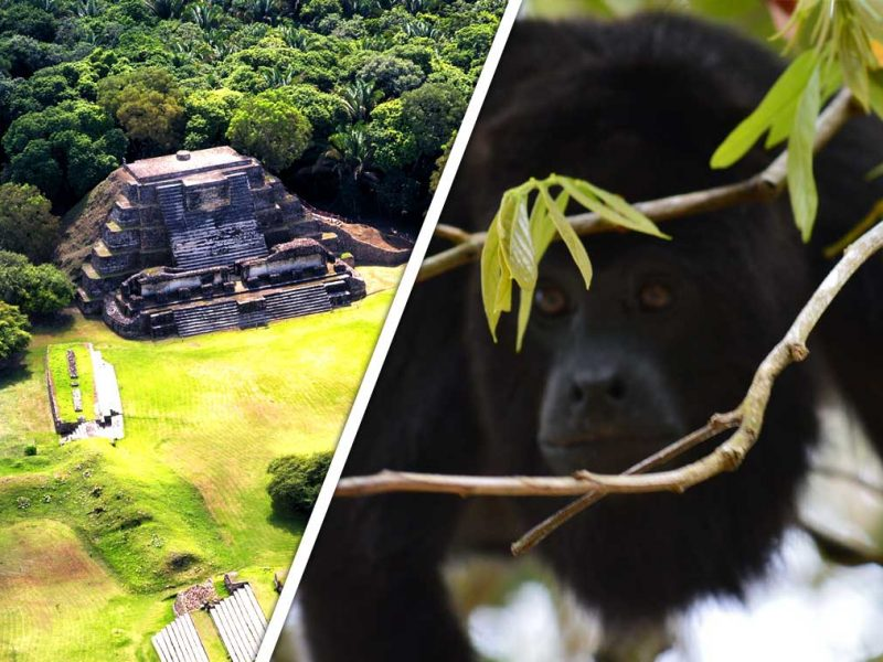 Belize Tours Marketplace - Shop independent local tours by local operators in Belize.